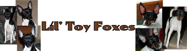 Lil Toy Foxes logo